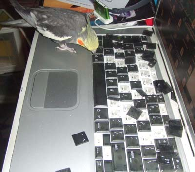 tiki wrecks keyboard